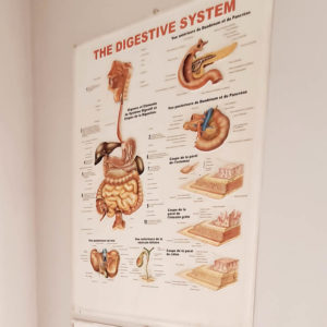 the-digestive-system-huma-body-chart-vintage-plastic-poster-1